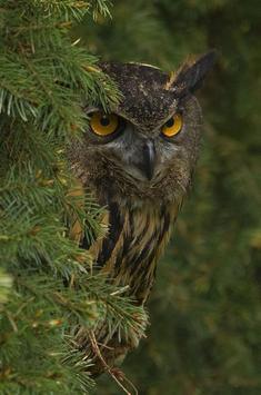 Night Owl Wallpaper poster