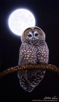 Night Owl Wallpaper screenshot 2