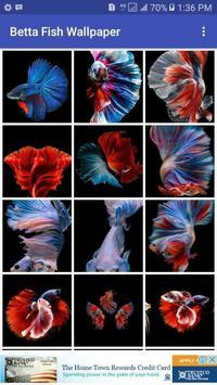 Betta Fish Wallpaper apk screenshot