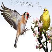 Birds Sounds icon