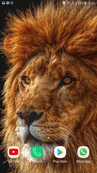 Lion wallpaper HD screenshot 3