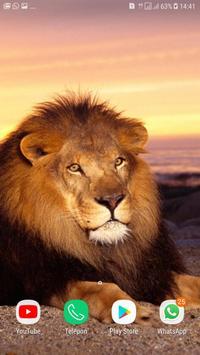 Lion wallpaper HD poster