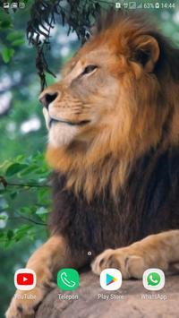 Lion wallpaper HD screenshot 4