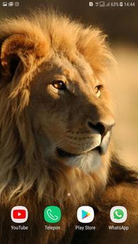 Lion wallpaper HD screenshot 5