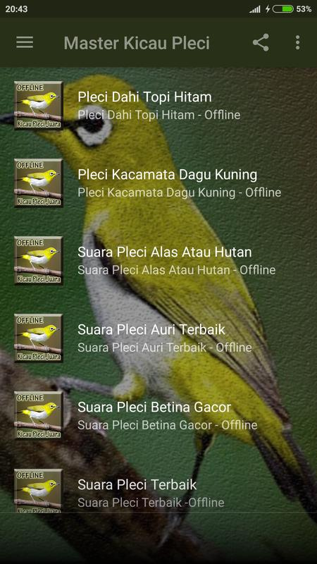 Master Kicau Burung Pleci for Android - APK Download fd19a14366