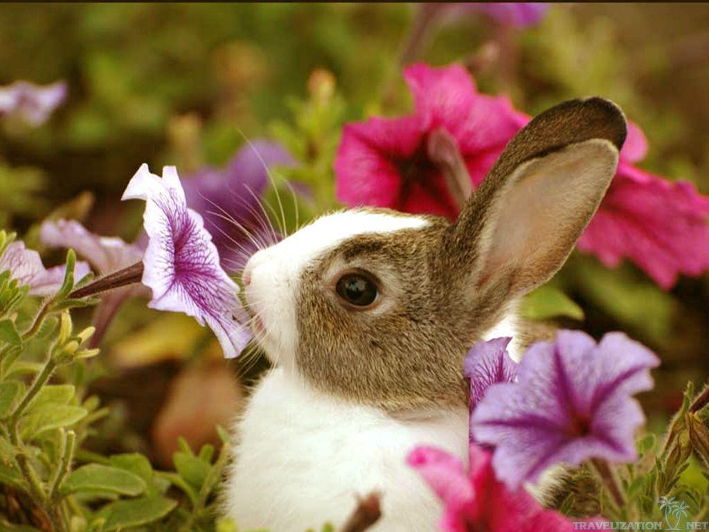 Cute Baby Animals Wallpaper For Android Apk Download