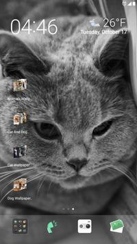 Cat Wallpaper HD apk screenshot