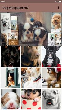 Dog Wallpaper HD poster