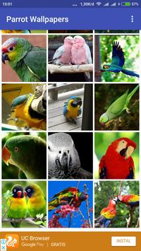 Parrot Wallpapers screenshot 1