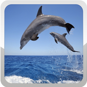 Dolphin Wallpapers icon