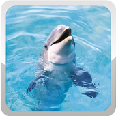 Dolphins Wallpaper icon