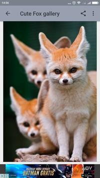 Cute Fox Wallpaper screenshot 3