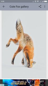 Cute Fox Wallpaper screenshot 2