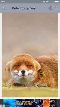 Cute Fox Wallpaper screenshot 4
