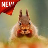 Squirrel Wallpaper icon