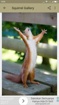 Squirrel Wallpaper screenshot 3