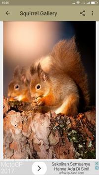 Squirrel Wallpaper screenshot 5