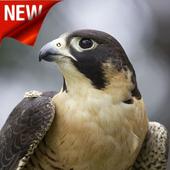 Hawk Wallpaper icon