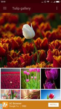 Tulip Wallpaper poster