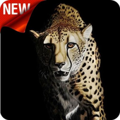 Cheetah Wallpaper icon