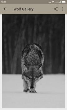 Wolf Wallpapers screenshot 2