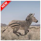 Zebra Wallpaper icon