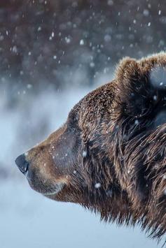 Bear Wallpaper poster