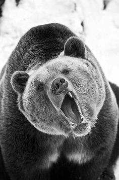 Bear Wallpaper screenshot 1
