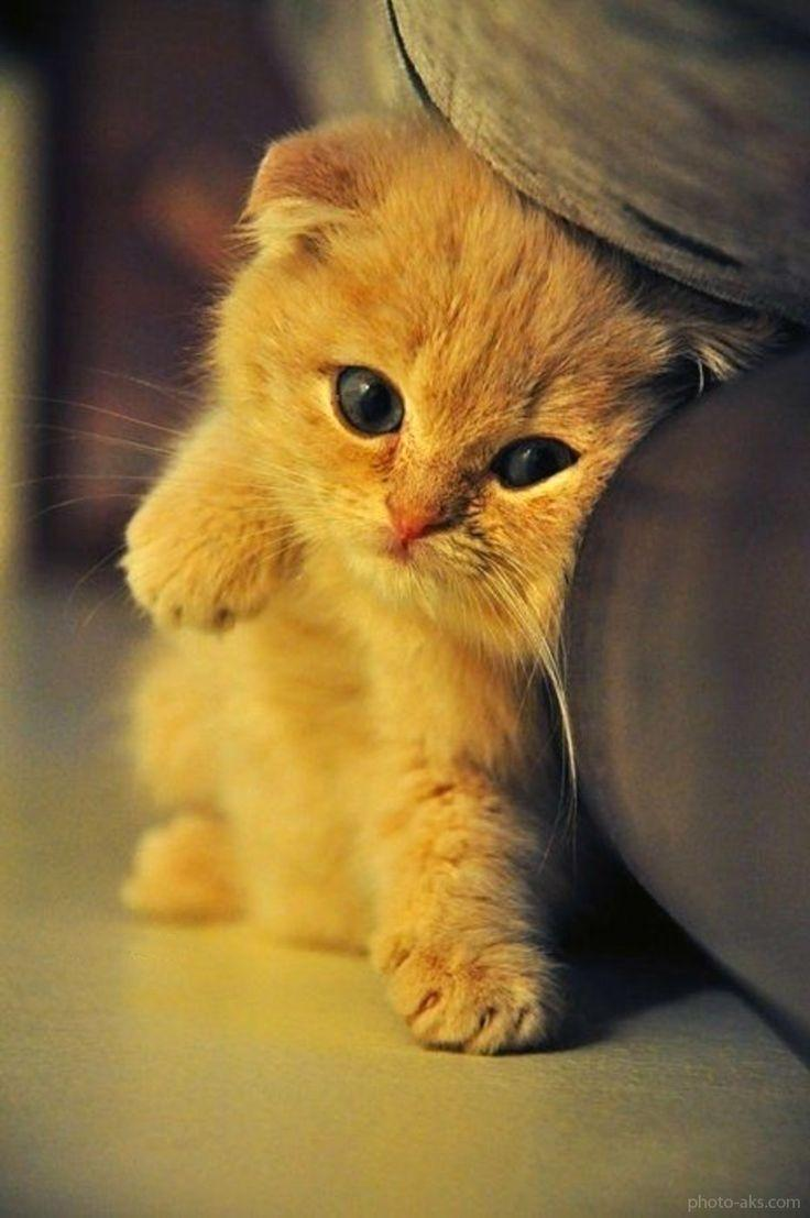 Cute Baby Cats Wallpapers For Android Apk Download