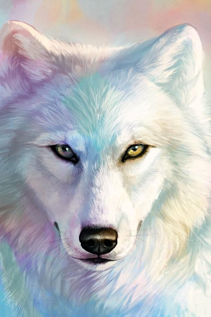 White Wolf Wallpaper For Android Apk Download