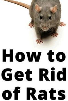 Rat Control screenshot 1