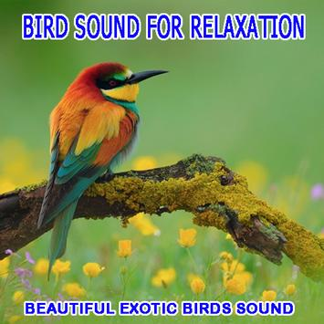 Bird Sounds For Relaxation poster