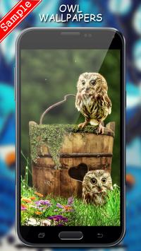 Owl Wallpaper screenshot 5