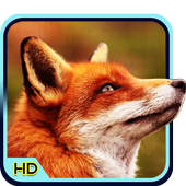 Fox 3d Wallpaper For Android Apk Download