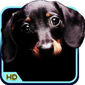 Dog 3d Wallpaper For Android Apk Download