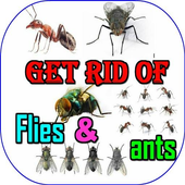 How To Get Rid Of Ants And Flies icon