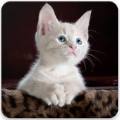 Cat Lover Wallpapers icon