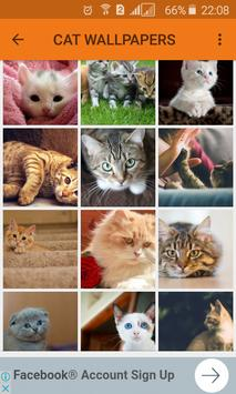 Cat Lover Wallpapers poster
