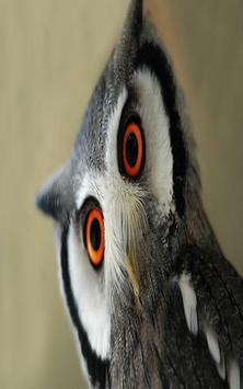 OWL Wallpaper screenshot 3