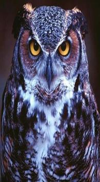 OWL Wallpaper poster