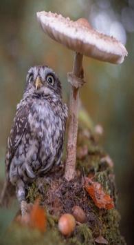 OWL Wallpaper screenshot 1
