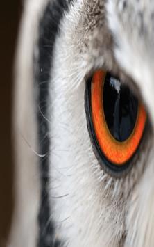 OWL Wallpaper screenshot 4