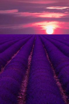Purple Wallpapers screenshot 1