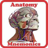 Anatomy Mnemonics icon