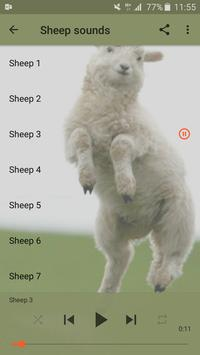 Sheep sounds poster