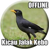 Suara Burung Jalak Kebo Gacor icon