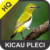 Kicau Pleci icon
