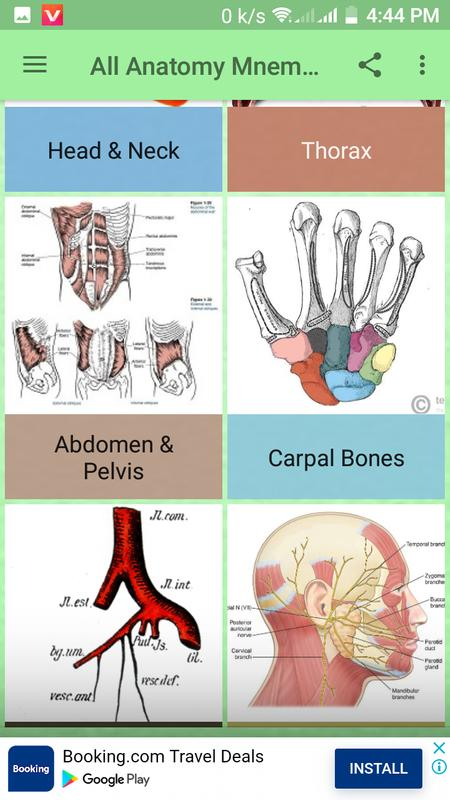 All Anatomy Mnemonic For Android Apk Download