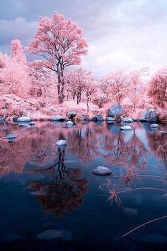 Sakura Art Wallpaper screenshot 22
