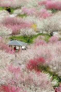 Sakura Art Wallpaper screenshot 4